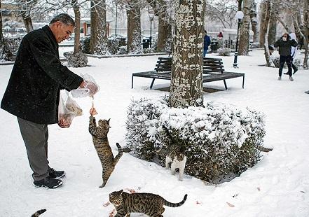 تصاویر/ بارش شدید برف در تبریز