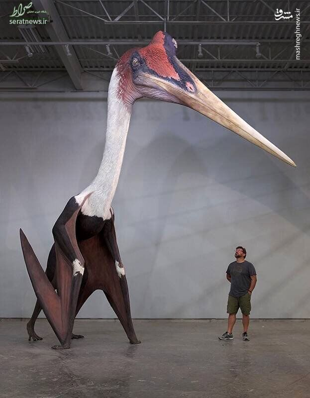 عکس/ بزرگترین پرنده جهان را ببینید