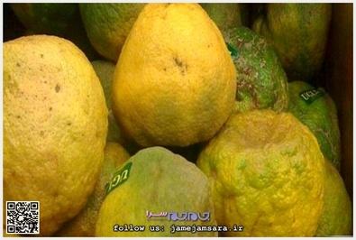 Ugli اوگلی زادگاه آن جامائیکاست و طعم آن شبیه گریپ فروت است.
