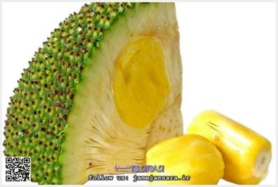 Jackfruit جاک فروت یا جاکویرا این میوه در جنوب و غرب هند و سریلانکا و فیلیپین و بنگلادش میروید. میوه جاک فروت شبیه آناناس، اما از آن شیرینتر است. از چوب این درخت به خاطر استحکام بسیار آن در ساخت اثاث منزل استفاده میشود.