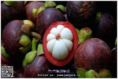 Mangosteen مانگوستین زادگاه اصلی این میوه اندونزی است. طعم آن ترش و دارای عطری بسیار خوشبو است و گفته شده از جمله میوههای ضدسرطان به شمار میآید و دارای فواید بسیار زیاد است.