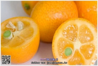 Kumqut کومکوت زادگاه اصلی این میوه چین است و از جمله مرکبات بسیار کوچک به شمار میآید که شبیه پرتقال و سرشار از ویتامین سی است.