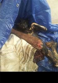 عکس دلخراش جنایت وحشتناک جنایت دلخراش جنایات عربستان اخبار یمن
