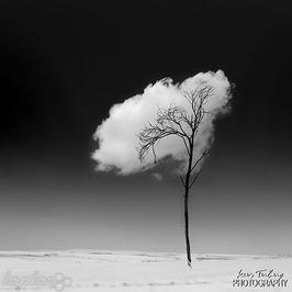 برگ درخت