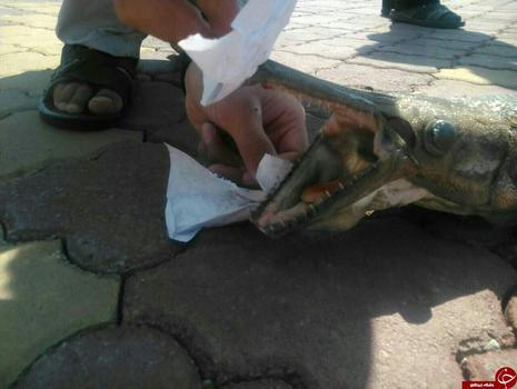 ماهی عجیب شایعات و شنیده ها دریاچه کیو حوادث خرم آباد اخبار خرم آباد