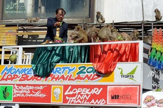 جشن پذیرایی از میمونها,روز بخور بخور میمون ها در تایلند,جشن میمون ها