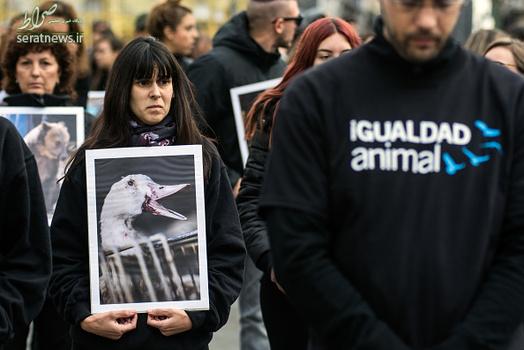 تجمع حامیان حقوق حیوانات , تجمع حامیان حیوانات , فعالان حقوق حیوانات , فعالان حقوق حیوانات در اسپانیا