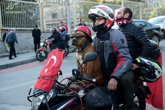 موتور سواری سگ , موتور سواری سگ در تظاهرات, موتور سواری سگ در ترکیه , سگ موتورسوار