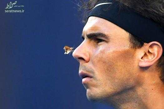 نشستن یک پروانه روی بینی رافائل نادال تنیسور اسپانیایی در طول رقابت با برابر میلوش رائونیچ کانادایی در مسابقات تنیس آزاد استرالیا