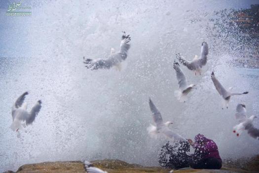 گرفتار شدن زیر موج بزرگ در ساحل سیدنی