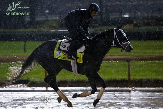 اسب سواری در لوئیزویل آمریکا