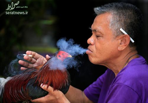 یک مرد فیلیپینی با خروس جنگی خود